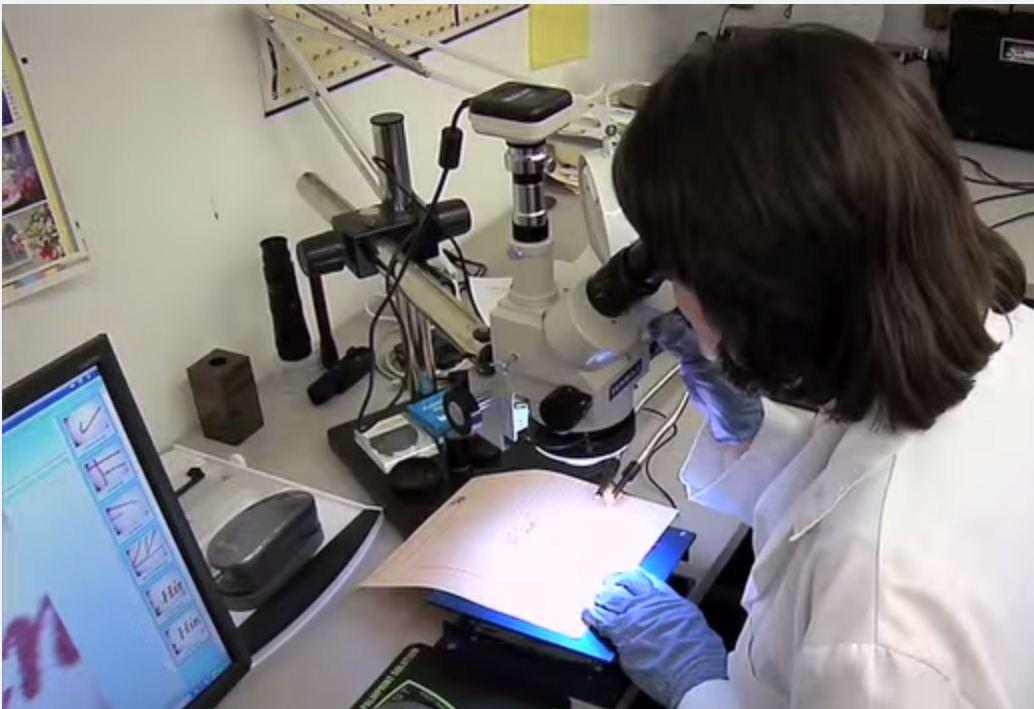 4 Microscopic Exam